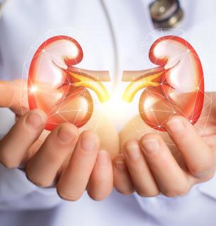 Дієта, сприятлива для нирок — це спосіб харчування, який допомагає захистити нирки від пошкодження