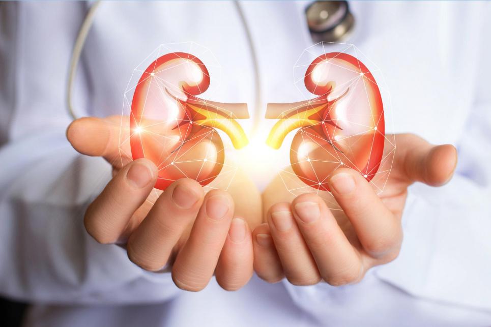 Експерт пояснила, як очистити нирки за сім днів