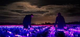 Завдяки незвичному світлу агрокультури ростуть швидше