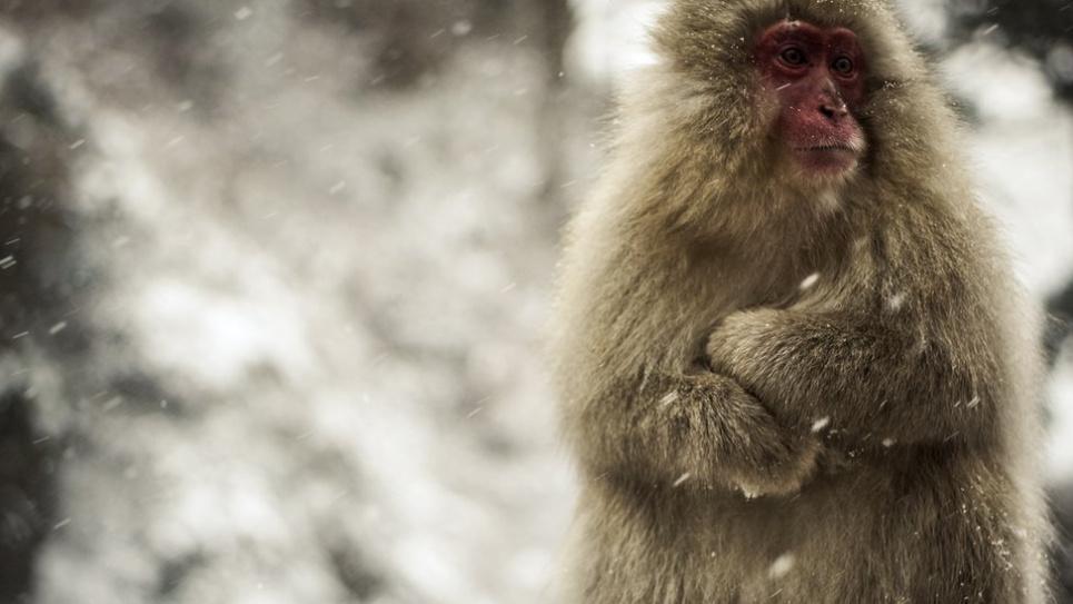 В центре Киева неизвестный мужчина снова приставал к прохожим с предложением сделать фотографию с обезьяной