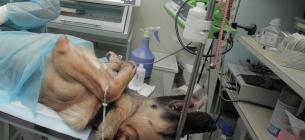 Зоозахисники та екоактивісти підозрюють, що комунальний притулок для собак у Харкові безпідставно присипляв тварин.