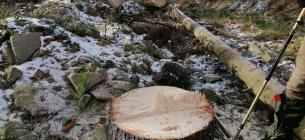 Вирубка лісу. Фото ілюстративне