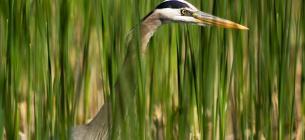 2 лютого екологи привертають увагу громадськості до проблем збереження болотних угідь