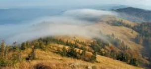 """В Національному парку від """"чорних лісорубів"""" страждають рідкісні дерева"""