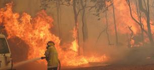 Вогонь в Австралії знищив 81 будинок