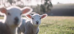 Народні обранці прийняли закон, який гарантує свійським тваринам гуманні умови утримання