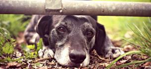 За издевательство над животными могут наказывать с 14 лет: комитет поддержал законопроект