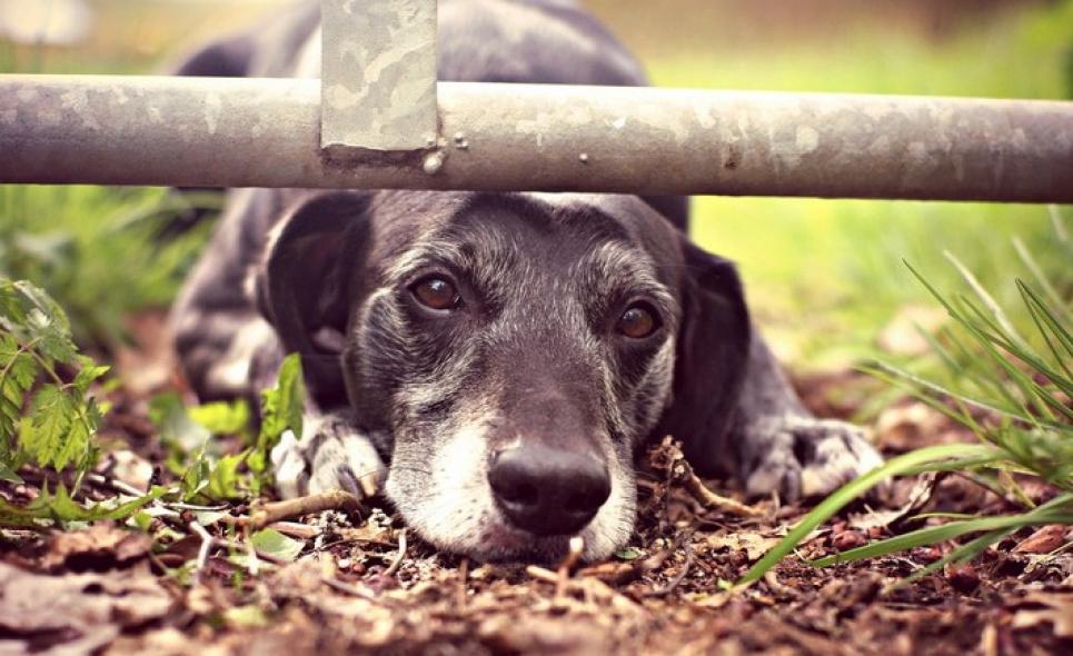 На Рівненщині виявили собаку, яка тиждень була без їжі з покійним господарем