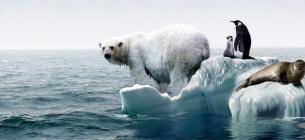 Наслідки гловбального потепління