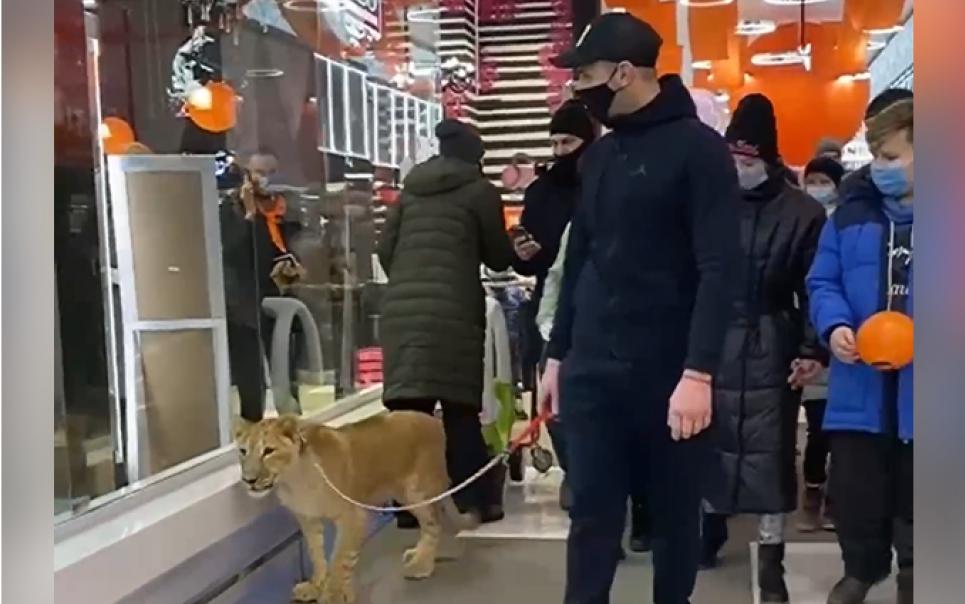 Чоловік гуляв з левеням по супермаркету