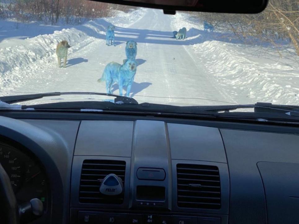 В Росії посиніли вуличні собаки