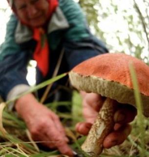 Херсонська ОДА встановила ставки рентної плати за спеціальне використання лісових ресурсів.