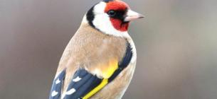 На Близькому Сході з пташок роблять дуже дорогий делікатес