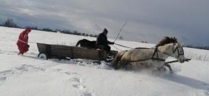 Дівчинку везли до лікарів на підводі, запряженій конем