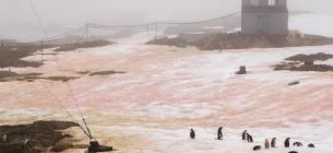 Фото Євген Прокопчук - Сніг в Антарктиді став кольоровим