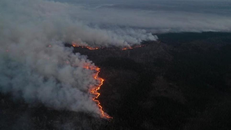 Екологи пропонують відокремити чорнобильські ліси протипожежними смугами