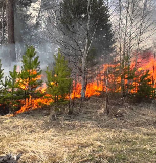 Депутати посилили охорону лісів від пожеж