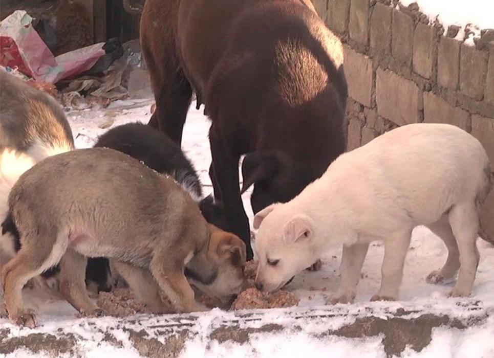 Добровольці створили службу порятунку вуличних тварин