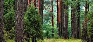 Ліси та водойми залишаються у підпорядкування Міністерства захисту довкілля