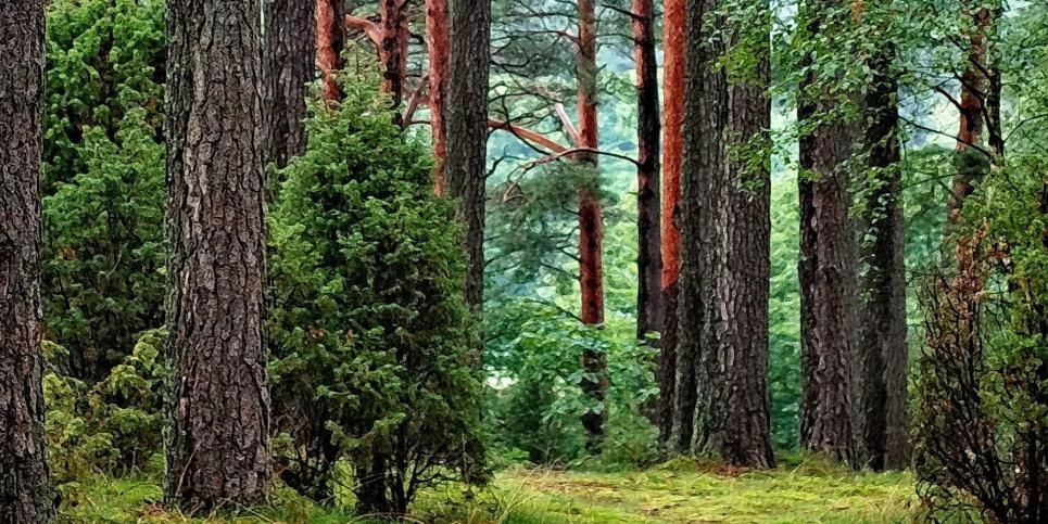 Агентства лесных и водных ресурсов осталась в подчинении Минокружающий среды