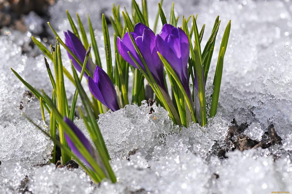 В Україну йде весна з теплом до +12