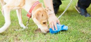 Мешканка Києва зареєструвала петицію про прибирання за тваринами.