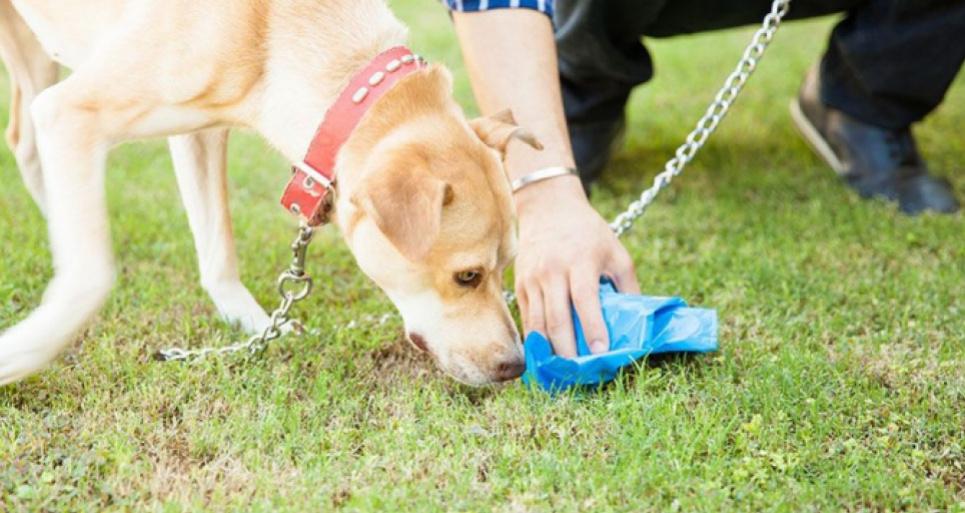Жительница Киева зарегистрировала петицию об уборке за животными.