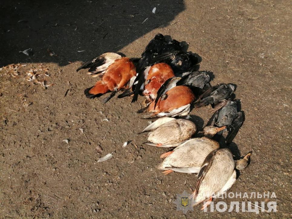 Мертвих птахів було виявлено сьогодні вранці керівником біосферного заповідника «Асканія Нова»