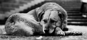 Через недосконале законодавство вбивці безпритульних псів часто уникають покарання