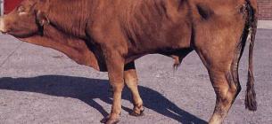 Фермер із Татарбунар довів своїх тварин до виснаження