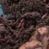 Завдяки каліфорнійським черв'якам, які переробляють зібране листя, на поверхні землі утворюється біогумус. Фото:Суспільне Черкаси