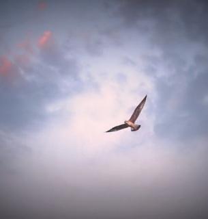 На Борнео знайшли рідкісного птаха