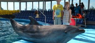 У підручниках для восьмикласників знайшли пропаганду жорсткого поводження з тваринами