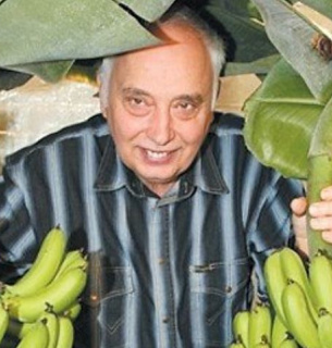 Продовольчі банани київського ентузіаста дають малі, але смачні плоди. Фото з відкритих джерел