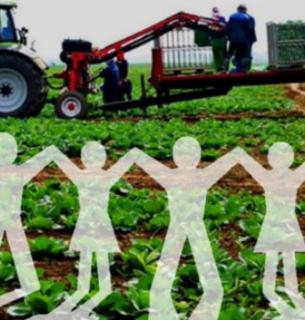 Кабмин принял документы, регламентирующие деятельность агрокооператив
