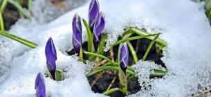 Погода на 8 березня: сніжитиме