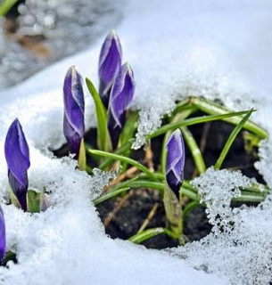 Погода на 8 березня: сніжитиме.