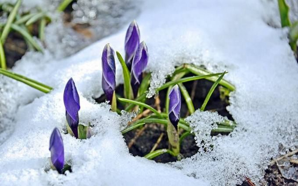 Погода на 8 марта: пойдет снег