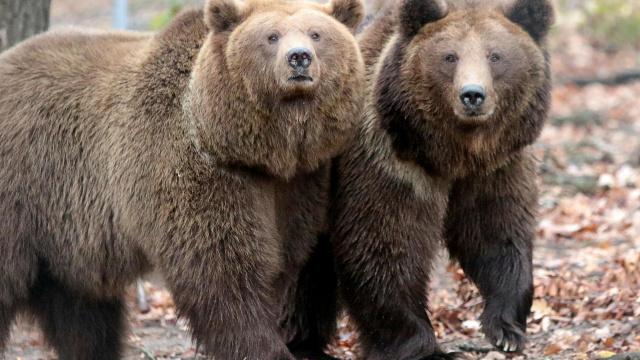 Во Львовской области открыл двери медвежий приют «Домажир»