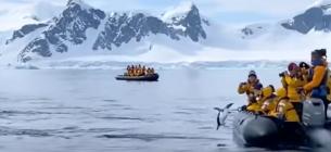 Пінгвін врятувався від косаток застрибнувши в човен до туристів