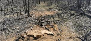 Вандали вирубають ліс на узбережжі Молочного лиману