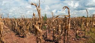 Глобальне потепління викликало найбільші посухи в Україні та Європі за останні 2000 років