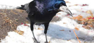 Прикмети на 17 березня: якщо чимало птахів на вулиці, то буде гарна погода
