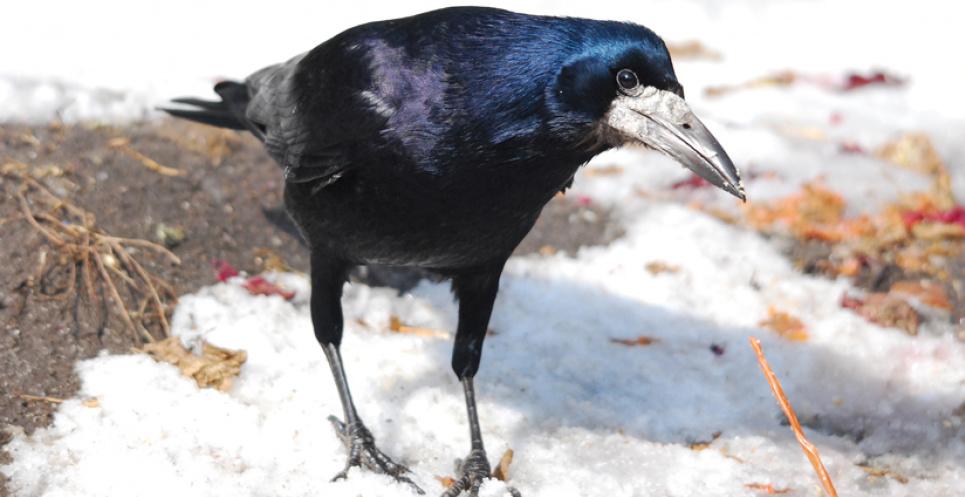 Приметы на 17 марта: если много птиц на улице, то будет хорошая погода