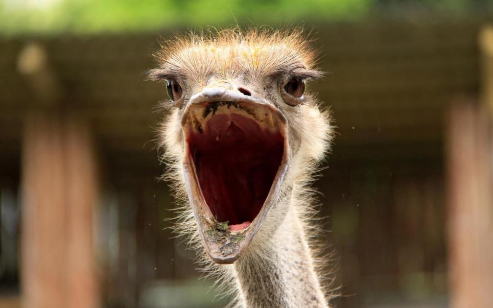 В Кривом Роге страус-беглец не на шутку удивил горожан