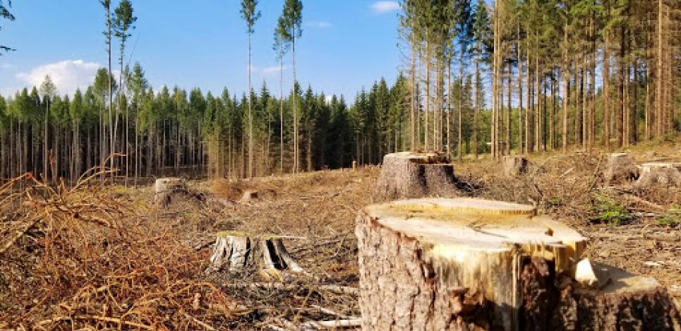 Лишь за два месяца текущего года зафиксировали уже более 800 преступлений против окружающей среды