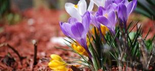 19 березня: яке сьогодні свято, прикмети та заборони