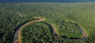 За 17 років на планеті люди знищили третину тропічних лісів