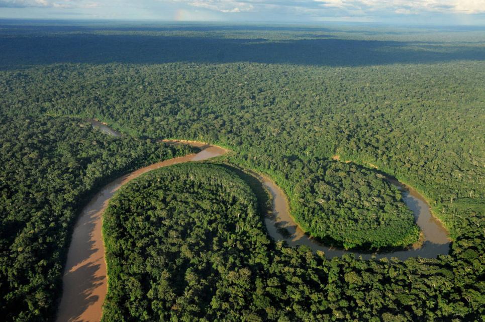 За 17 лет на планете люди уничтожили треть тропических лесов