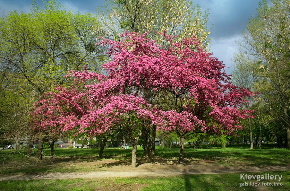 Фото gals.kiev-foto.info — Якою буде погода у квітні в Україні